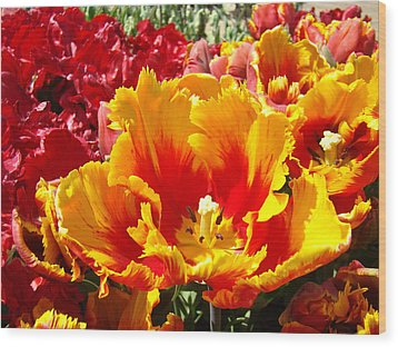 Spring Tulip Flowers Art Prints Yellow Red Tulip Wood Print by Baslee Troutman