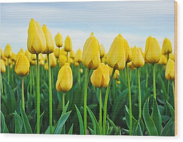 Spring Tulips Wood Print by Crystal Hoeveler