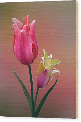 Wood Print featuring the photograph Spring Tulips by Judy  Johnson