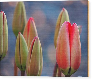 Wood Print featuring the photograph Spring Tulips by Karen Horn