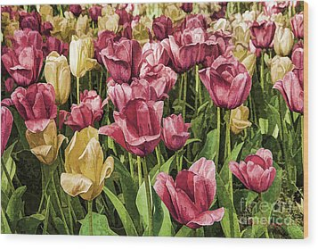 Wood Print featuring the photograph Spring Tulips by Linda Blair