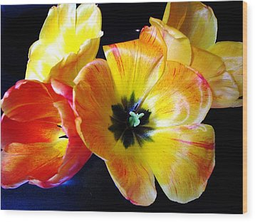 Spring Tulips Xx Wood Print by Judyann Matthews