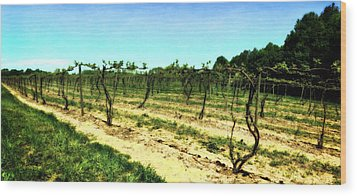 Spring Vineyard Ll Wood Print by Michelle Calkins