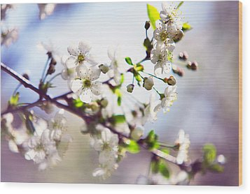 Spring White Cherry Tree  Wood Print by Jenny Rainbow