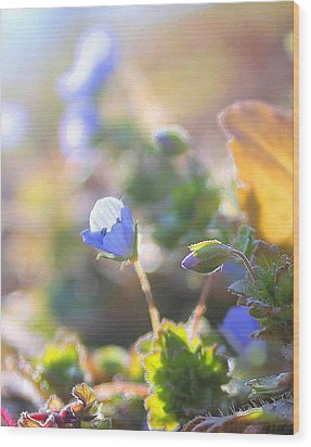 Wood Print featuring the photograph Spring Wildflowers by Candice Trimble