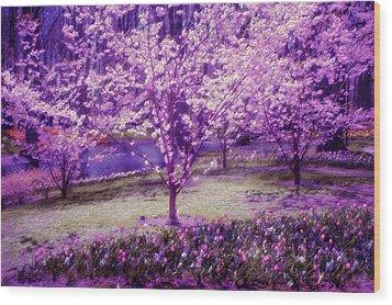 Spring Wonderland Pastel. Garden Keukenhof. Netherlands Wood Print by Jenny Rainbow