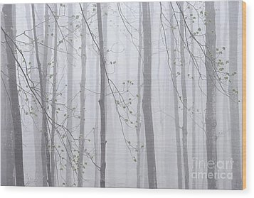 Spring Woodland Fog 1 Wood Print by Alan L Graham