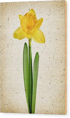 Spring Yellow Daffodil Wood Print by Elena Elisseeva