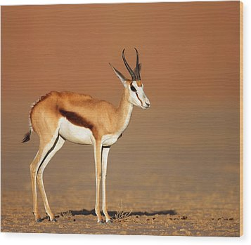 Springbok On Sandy Desert Plains Wood Print by Johan Swanepoel