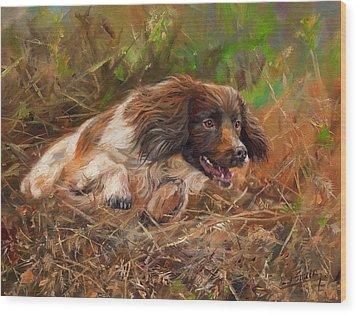 Springer Spaniel 2 Wood Print by David Stribbling