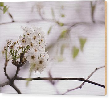 Springs Blossom  Wood Print by Mike Lee