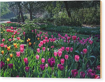 The Promise Of Spring Wood Print by Lynn Bauer