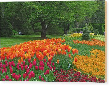 Springtime At Longwood Gardens Wood Print by Dan Myers