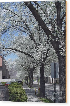 Springtime Corning Ny 2 Wood Print by Tom Doud