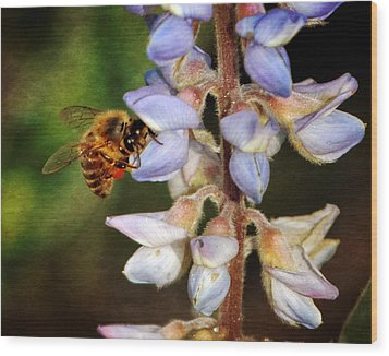 Wood Print featuring the photograph Springtime II by Dawn Currie