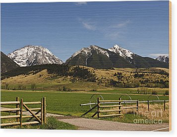 Wood Print featuring the photograph Springtime In Montana by Sue Smith