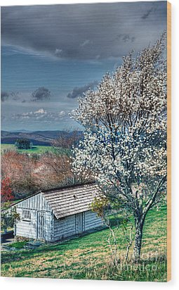 Springtime In The Blue Ridge Mountains I Wood Print by Dan Carmichael