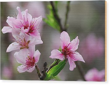 Wood Print featuring the photograph Springtime In The South by Amee Cave