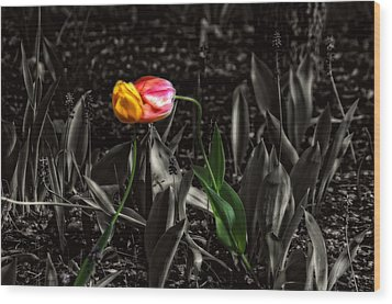 Springtime Kiss Wood Print by Dan Quam