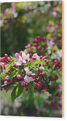 Wood Print featuring the photograph Springtime by Linda Mishler