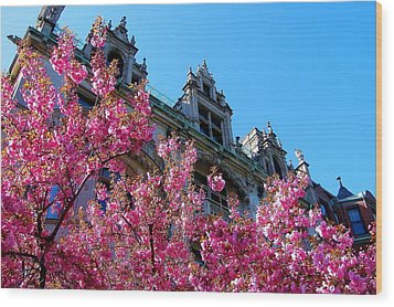Springtime On Commonwealth Avenue Wood Print