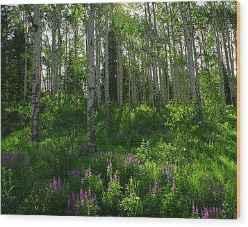 Springtime On The Grand Mesa Wood Print by Ernie Echols
