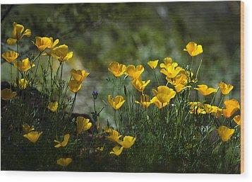 Springtime Poppies  Wood Print by Saija  Lehtonen