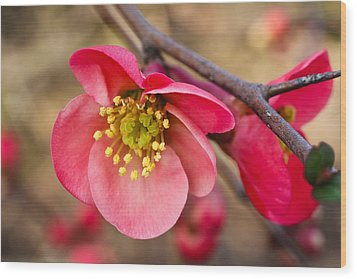 Springtime Quince Wood Print by Julie Andel