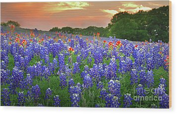 Springtime Sunset In Texas - Texas Bluebonnet Wildflowers Landscape Flowers Paintbrush Wood Print by Jon Holiday