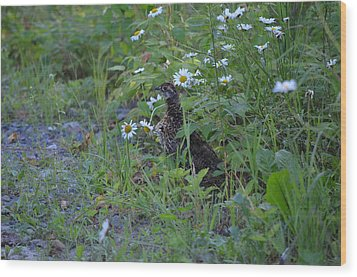 Wood Print featuring the photograph Spruce Grouse by James Petersen