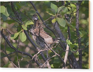 Wood Print featuring the photograph Spruce Grouse2 by James Petersen