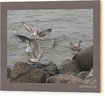 Squabbling Gulls Wood Print by Patricia Overmoyer