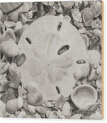 Square Sepia Sand Dollar Wood Print by Birgit Tyrrell