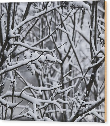 Square Snowy Branches Wood Print by Birgit Tyrrell