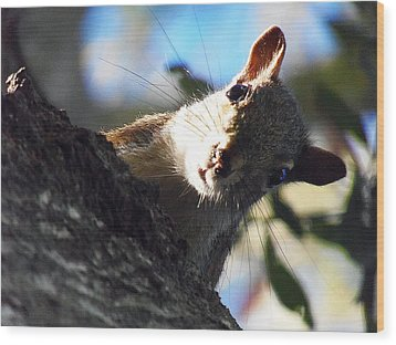 Wood Print featuring the photograph Squirrel 003 by Chris Mercer