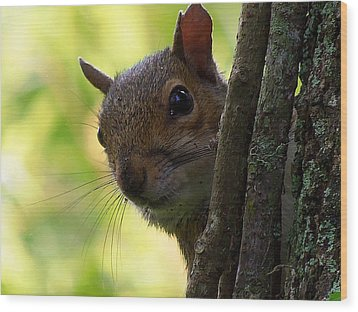 Wood Print featuring the photograph Squirrel 025  by Chris Mercer