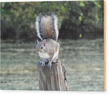 Wood Print featuring the photograph Squirrel 035 by Chris Mercer