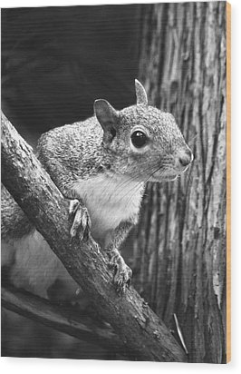 Squirrel Black And White Wood Print by Sandi OReilly