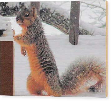 Wood Print featuring the photograph Squirrel Checking Out Seeds by Janette Boyd