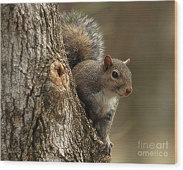 Squirrel Wood Print by Douglas Stucky