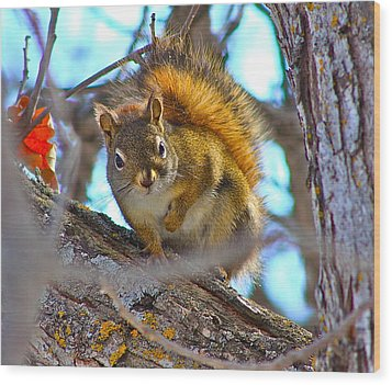 Wood Print featuring the photograph Squirrel Duty. by Johanna Bruwer