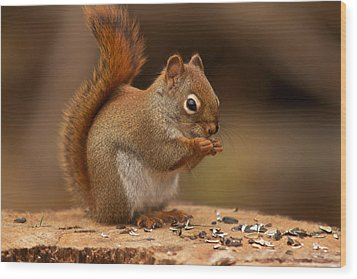 Squirrel Eating Wood Print by Josef Pittner