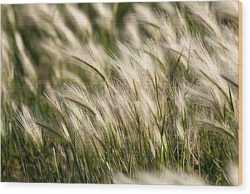 Wood Print featuring the photograph Squirrel Grass by Fran Riley