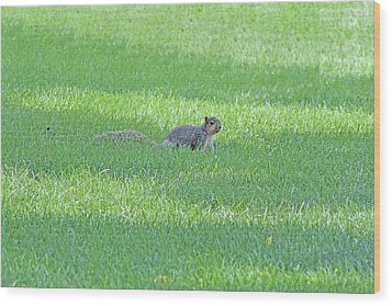 Wood Print featuring the photograph Squirrel In Grass by Lorna Rogers Photography