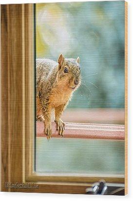 Squirrel In The Window Wood Print by LeeAnn McLaneGoetz McLaneGoetzStudioLLCcom