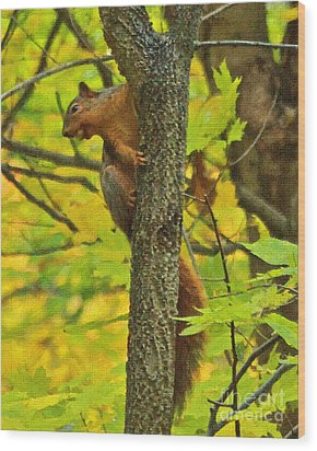 Squirrel In The Woods 2 Oil Wood Print