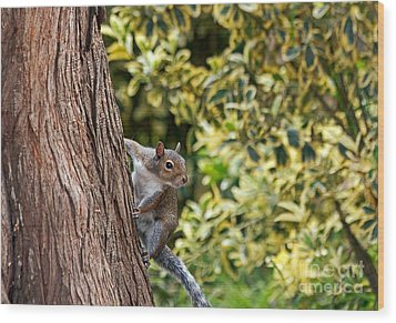 Wood Print featuring the photograph Squirrel by Kate Brown