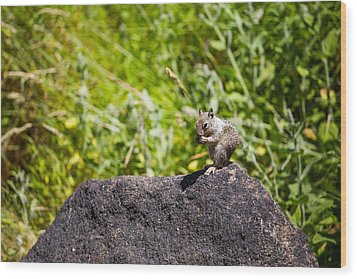 Squirrel Lunch Wood Print by Mike Lee
