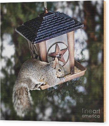Squirrel On Bird Feeder Wood Print by Elena Elisseeva