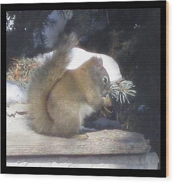 Squirrel Three Wood Print by Cathy Long